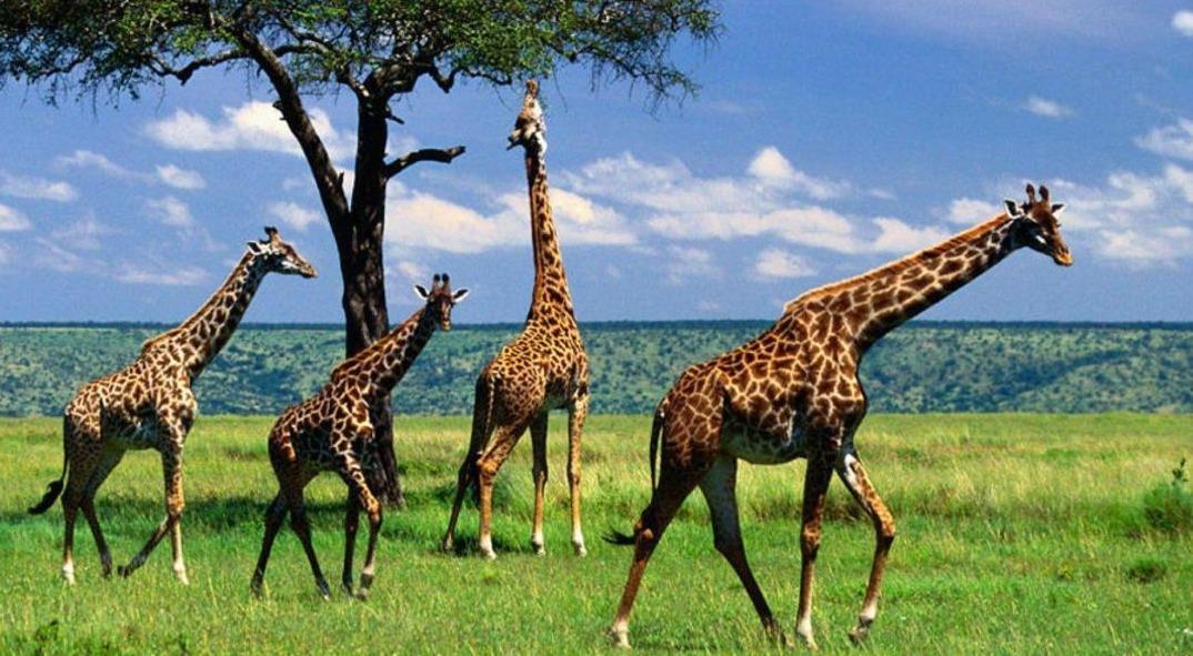 تور تانزانیا.amordadtour.com