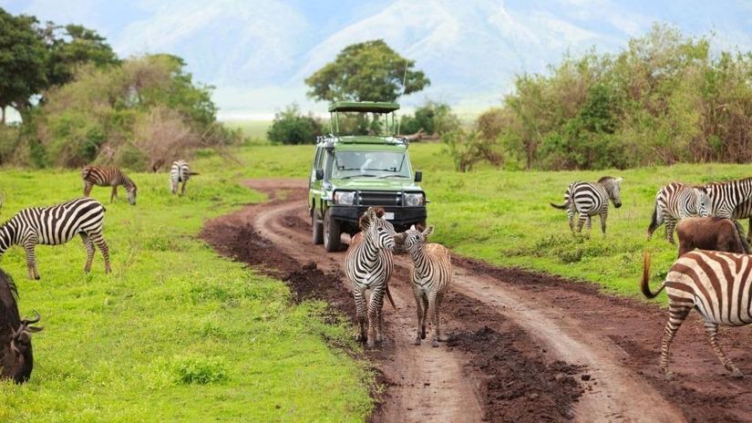 تور تانزانیا.amordadtour.ir